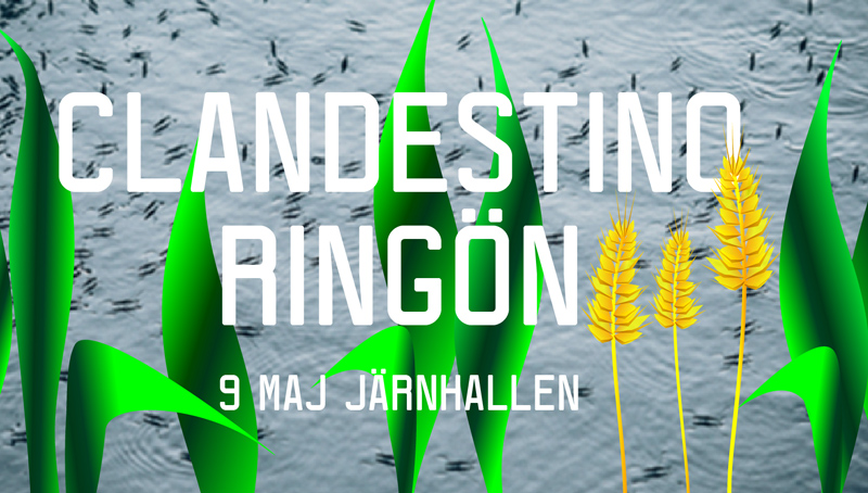 Clandestino-Ringon800px